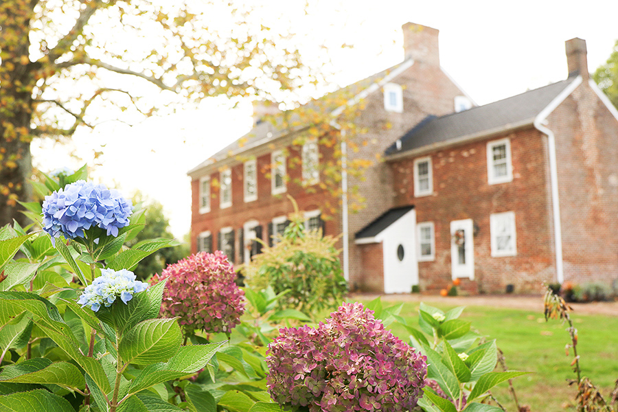 A view of hydrangeas with Worsell Manor in the background