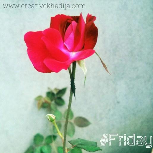 creative khadija instagram photography-1