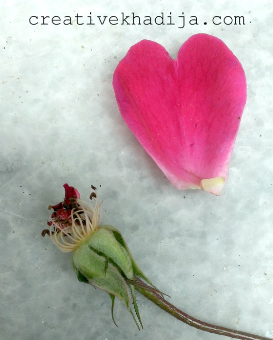 valentine-day-flowers-rose-heart-red