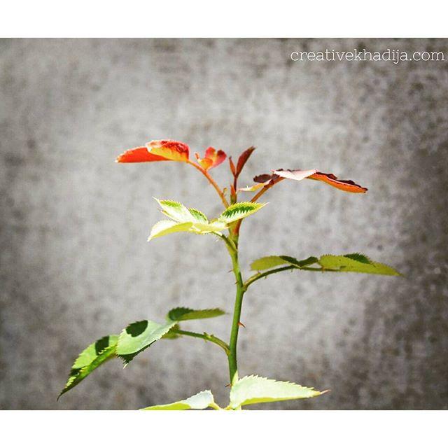 creative-khadija-photography-spring-flowers-roses