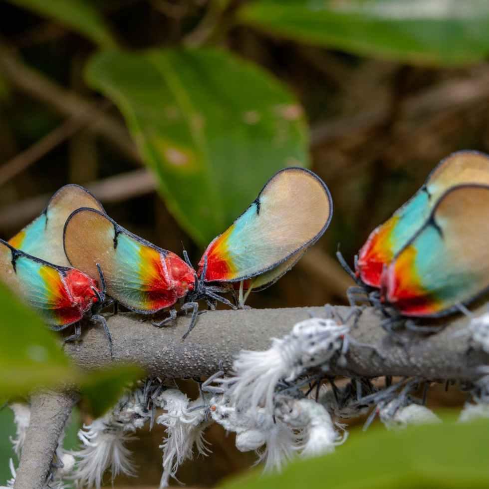 nature bird summer animal