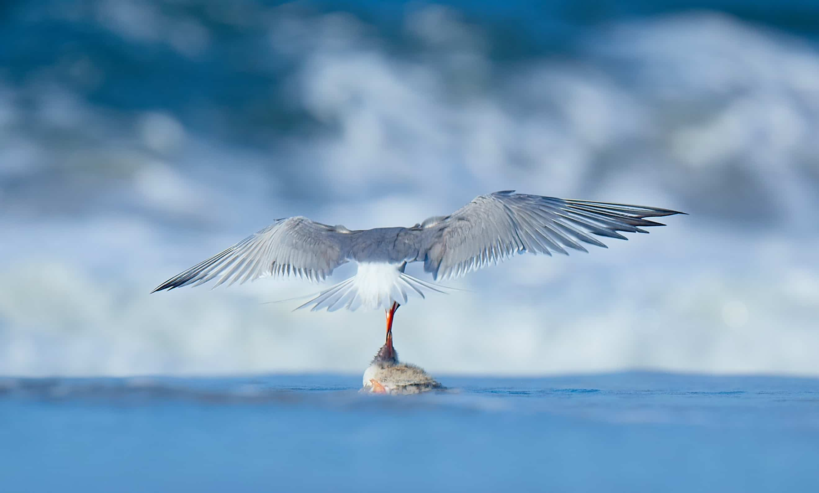 Photographing Shorebirds – Best locations in New York & New Jersey