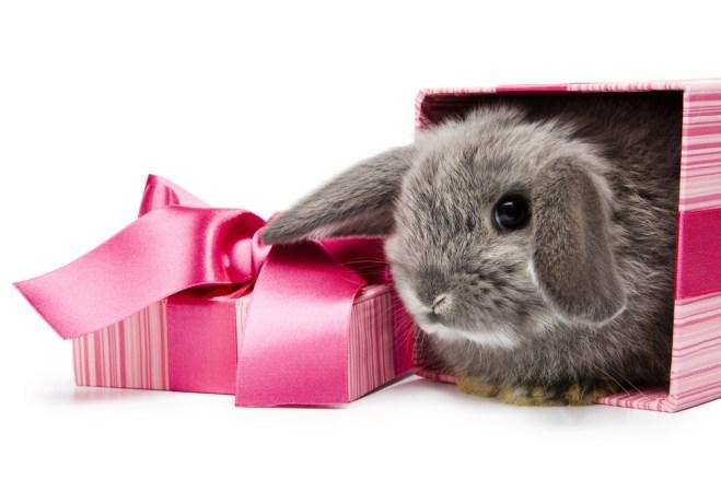 rabbit20at20christmas20shutterstock_48153541