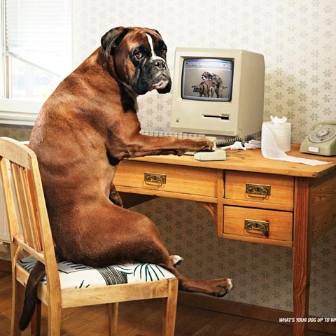 funnydog 100 Most Funny and Creative Advertisement Designs
