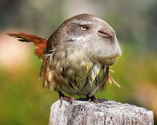 rodent-bird