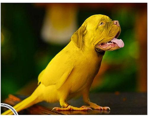 yellow-thirsty-dog