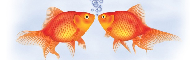 gold-fish-banner