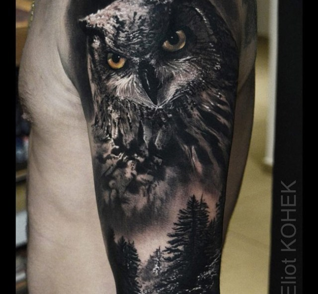 owl-forest