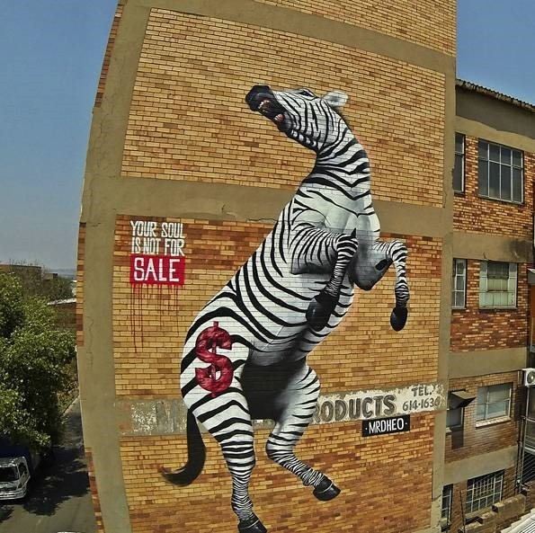 mrdheo-zebra