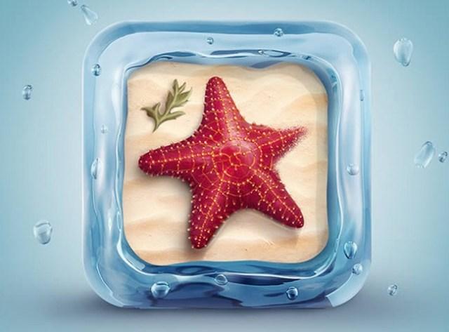 star-fish-icon