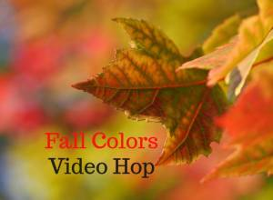 Fall Colors Video Hop