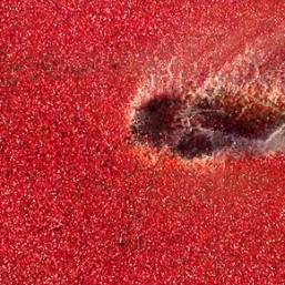 cranberry-creativequico-4