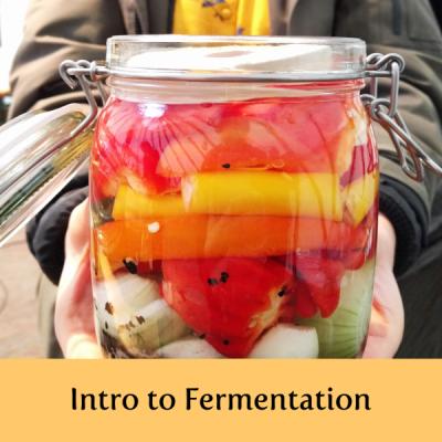 creative-switzerland-fermentation-cooking-classes-creativity-entrepreneurship