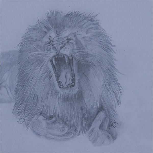 Amazing Lion Drawing