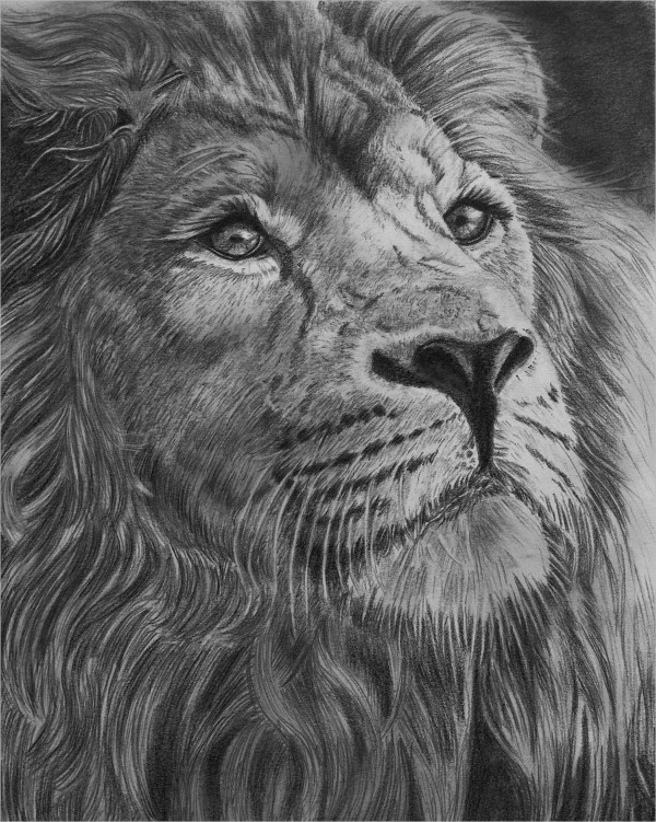Graphite pencil Drawing