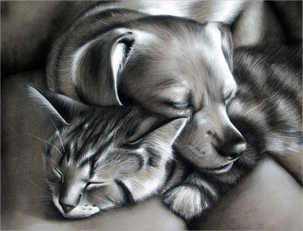 Charcoal Drawing of Dog & Cat Together