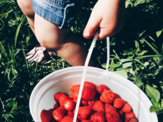 tips to a successful strawberry picking