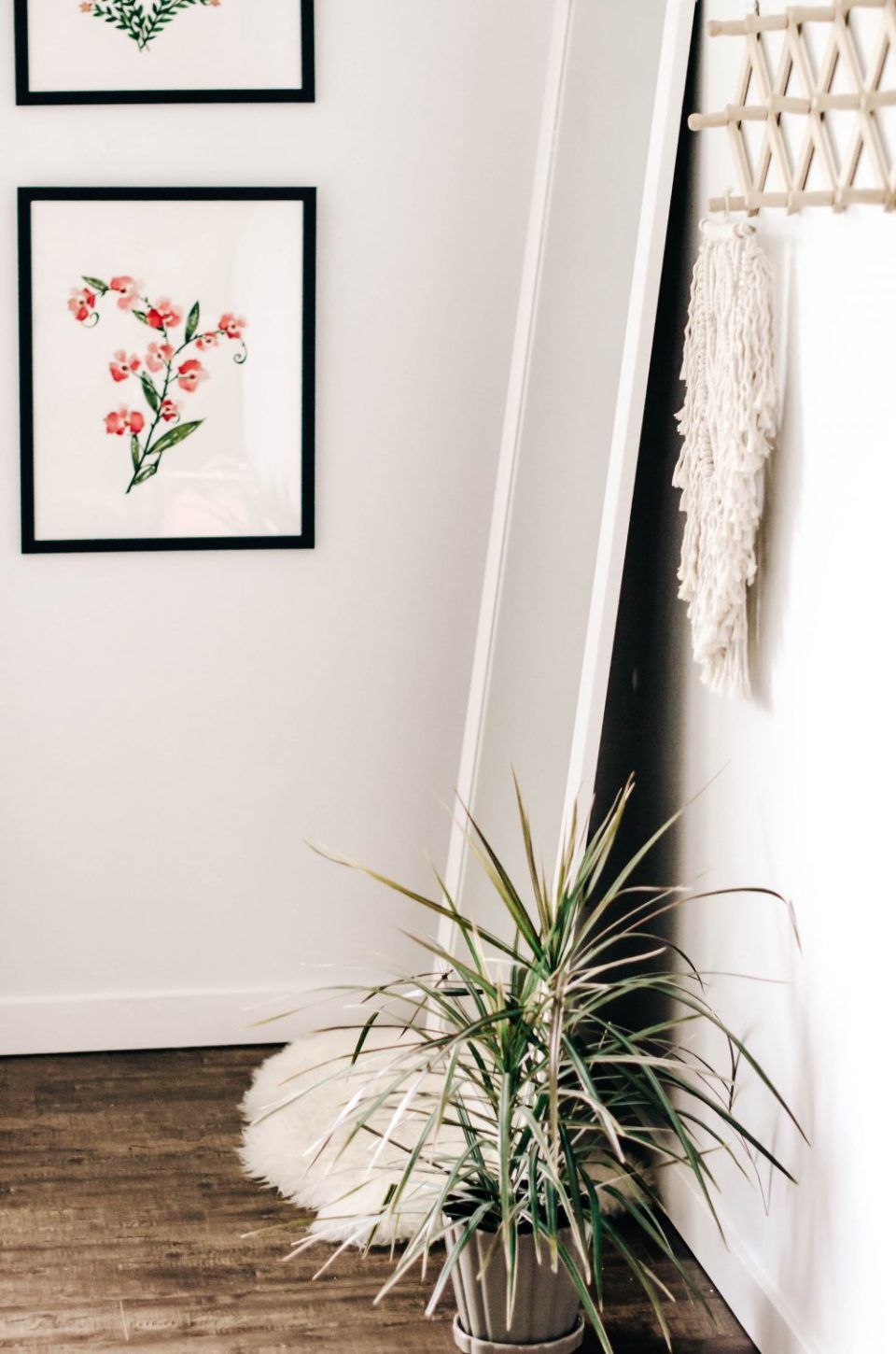 7 House Plants that are Easy to Keep Alive