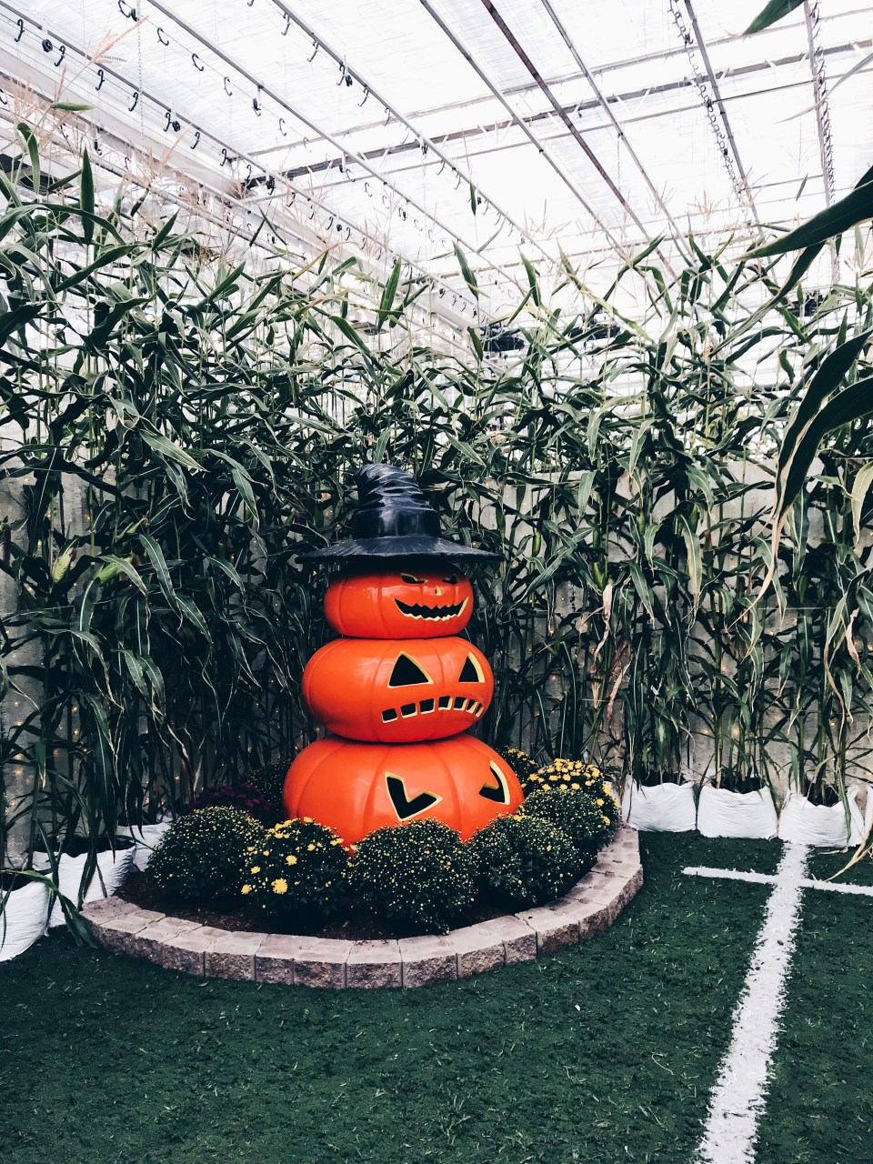 Glow Harvest in Langley | Indoor Pumpkin patch - 3
