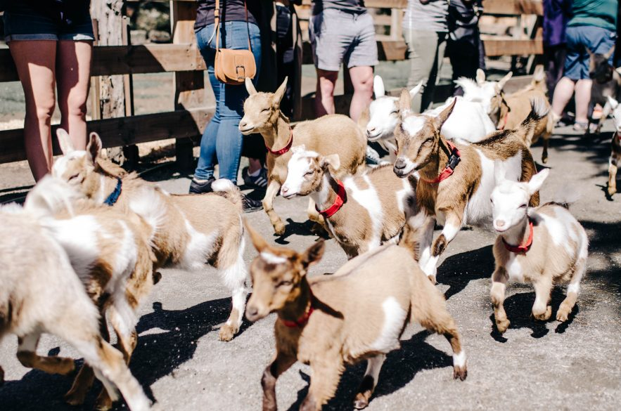 Beacon Hill Children's Farm & Petting Zoo | 10 Things to do in Victoira BC