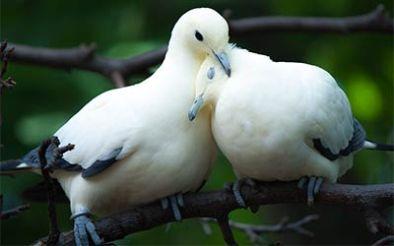 _sp-zaljubljeni-par
