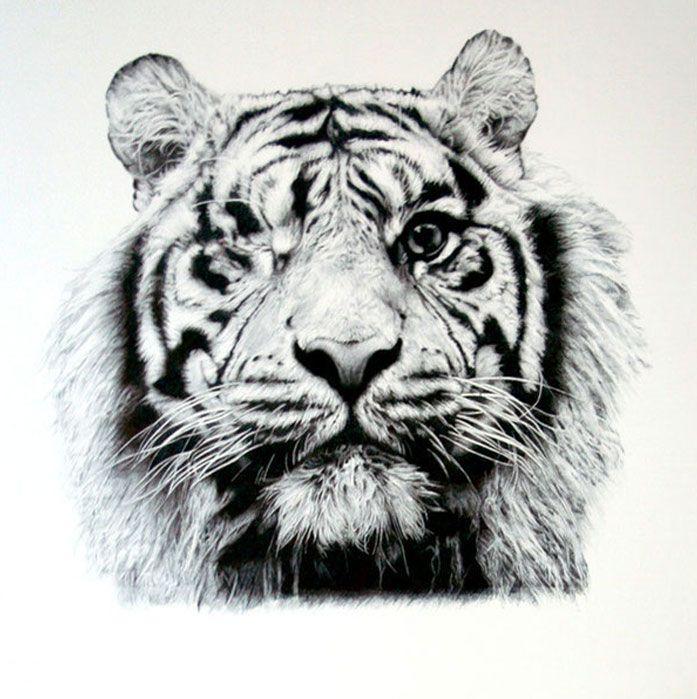 tigre paco marmol ilustracion