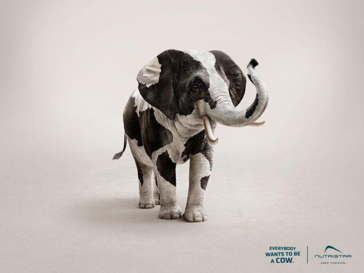 elefante quiero ser una vaca