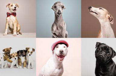 Curso fotografía perros