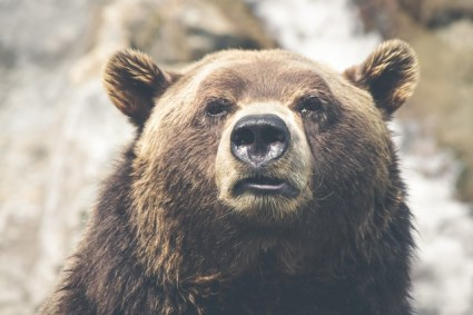 nature-animal-fur-dangerous