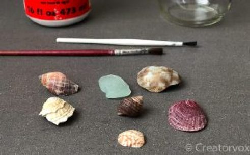 seashells collected from the beach