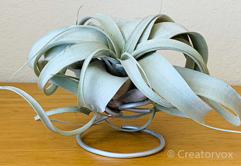 front view of armature wire artistic air plant holder