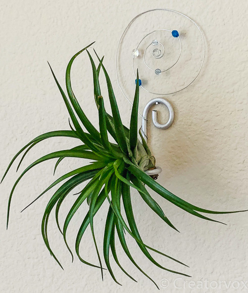 wall-mounted armature wire air plant holder with beads and thin wire spiral