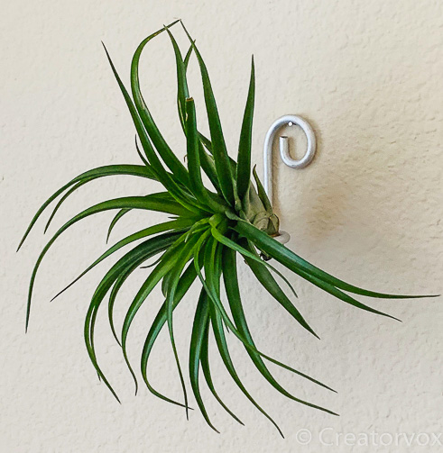 wall-mounted air plant holder from thick wire