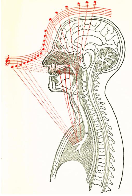 Voz de cabeza