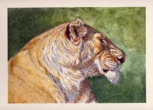 Aaron Blaise Animal Art Lioness