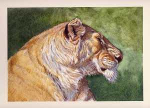 Aaron Blaise Animal Art Lioness