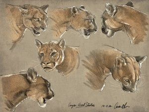 How to Draw Big Cats Animal Course