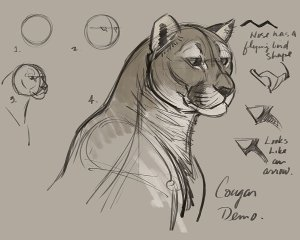 How to Draw Cougars