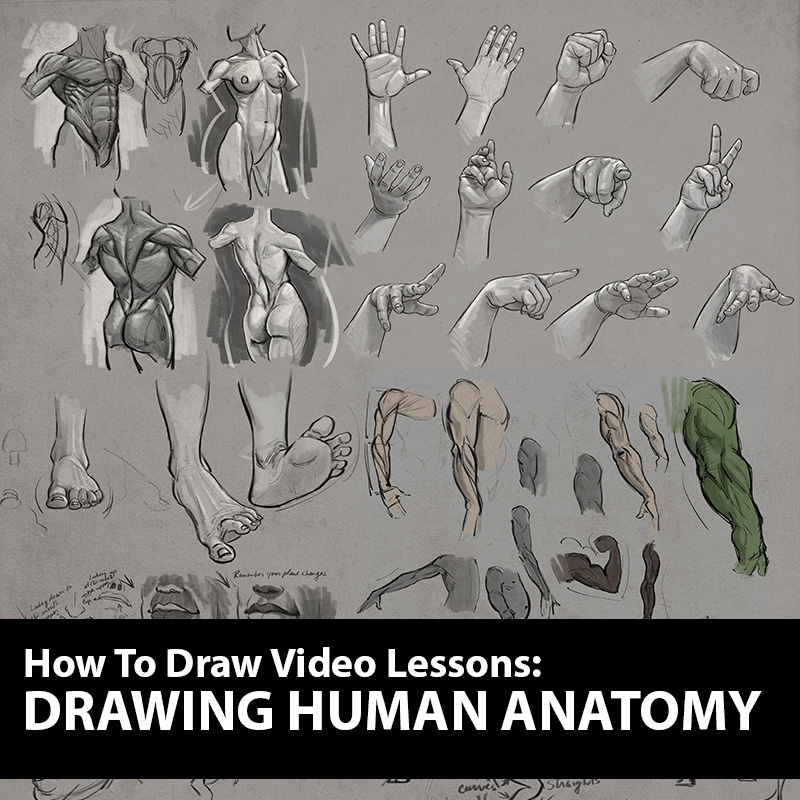 How to Figure Drawing Tutorial - Drawing Human Anatomy Lessons