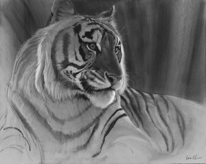 charcoal drawing tutorial