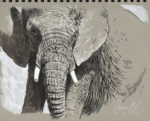 Aaron Blaise Pen & Ink Elephant lesson how to draw