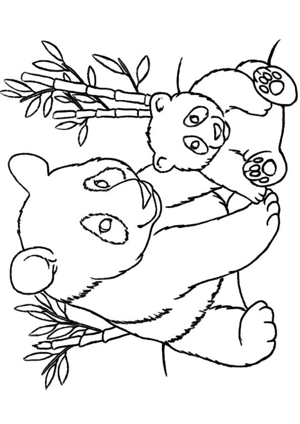 Panda coloing page
