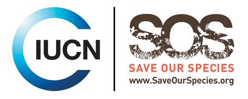 Hammerhead conservation logo