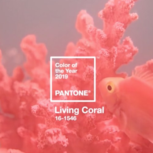 creatyum-media-living-coral
