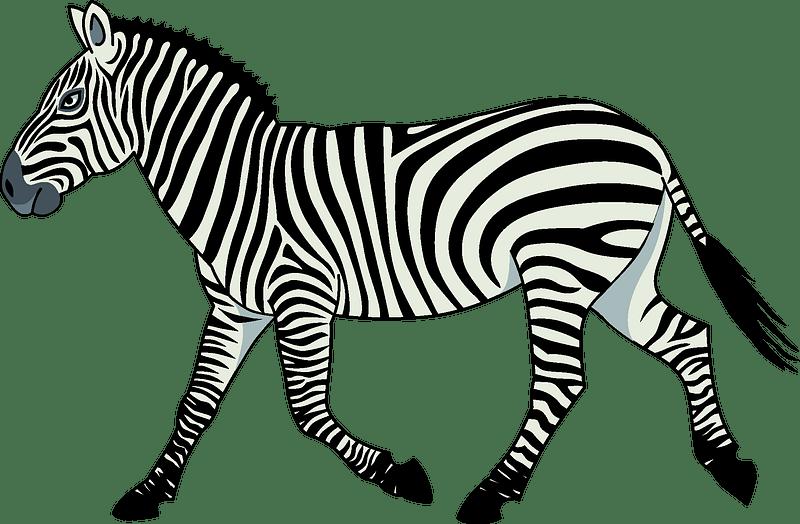 Zebra Clipart Free Download