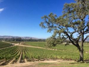 scribe winery, sononma