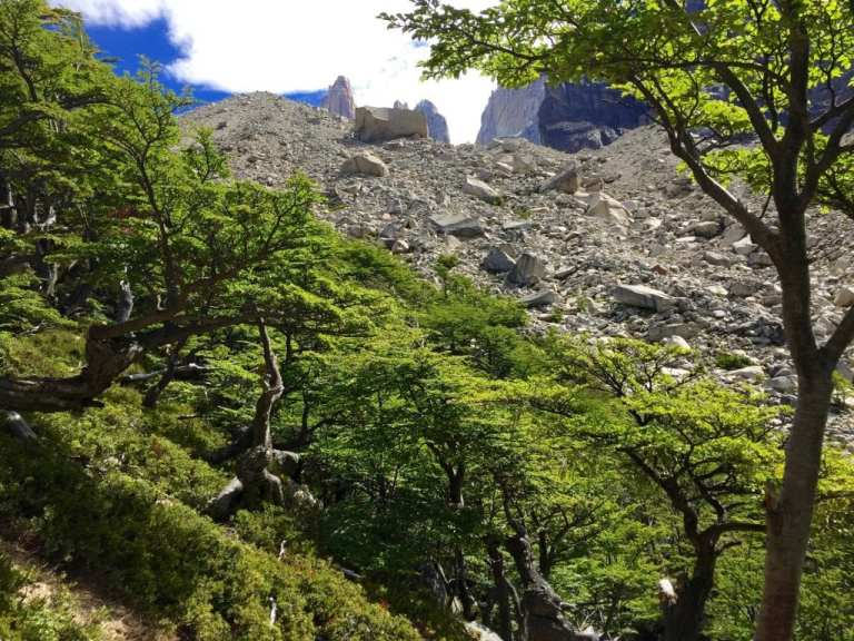 Lenga forest, Torres del Paine