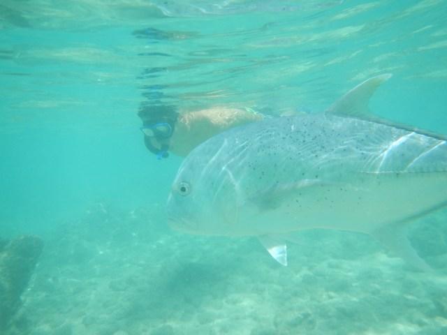 Hanauma Bay Snorkeling Giant Trevally