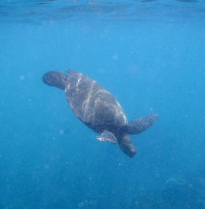 molokini and turtle town snorkeling adventure review