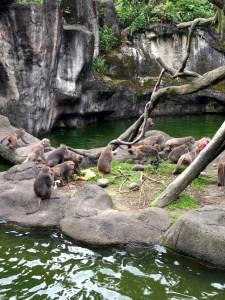 Things to do in Taipei - Taipei Zoo